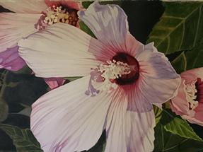 art_46 Pink Hibiscus