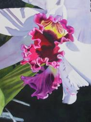 art_50 Orchid