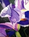 art_101 Purple Iris