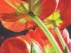 art_76 Allans Tulips